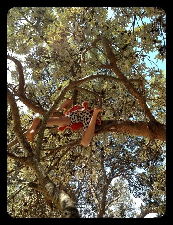 torakina tree kangaroo